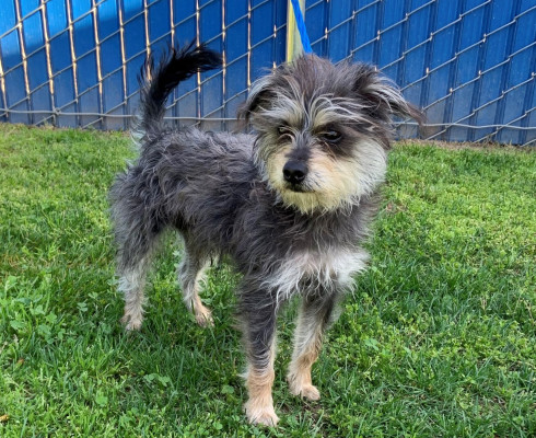 CAS SEARCHING FOR OWNER: Terrier Mix, Male, 2/25/21