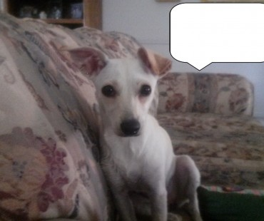 LOST WHITE SMALL DOG