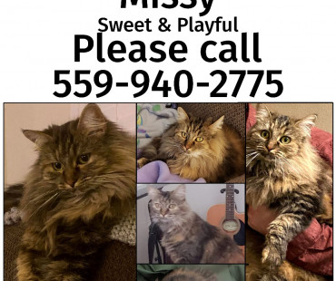 Missing Cat: Missy