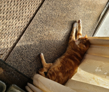 Lost Male Orange Tabby