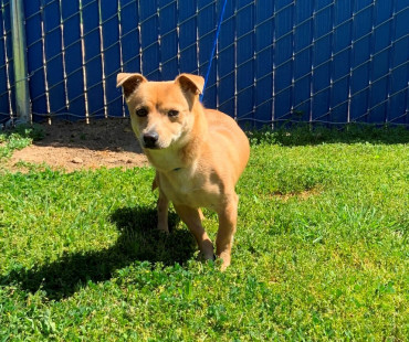 CAS SEARCHING FOR OWER: Terrier Mix, Male, 04/02/2021