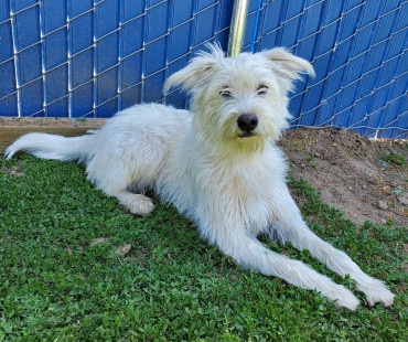 CAS SEARCHING FOR OWNER: Terrier Mix, Female, 4/5/21